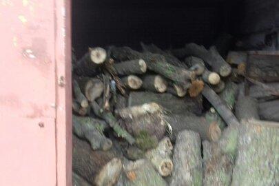 Спиляні стовбури дерев в кількості 67 штук