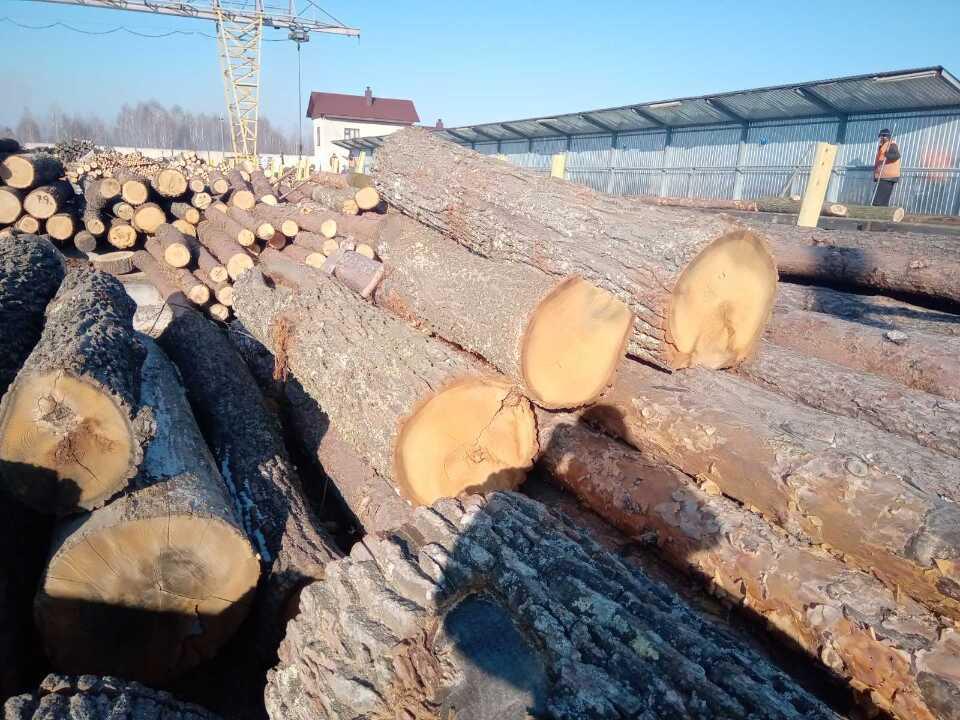 Деревина породи