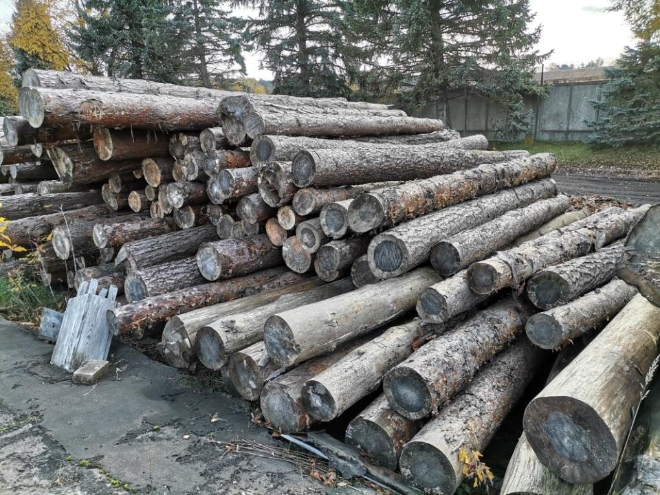 1. Зрізані колоди дерев породи