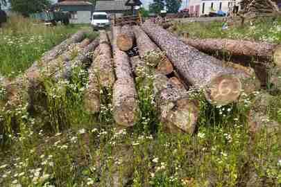 Колоди дерев породи «сосна» в кількості 38 штук довжиною від 4 до 7 метрів загальним об'ємом 11,958 м.куб.
