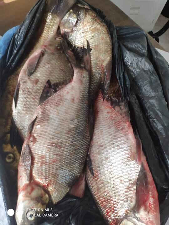 Риба лящ в кількості 9 штук , вагою 8 кг, свіжоморожена