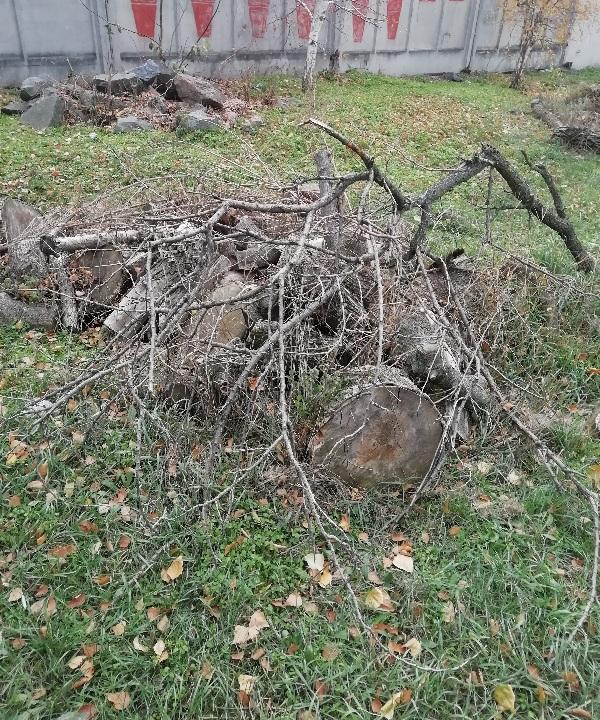 Частини стовбура дерева дуба, діаметром від 0,2 до 0,6 м., довжиною від 0,5 до 1 м., в кількості 58 штук