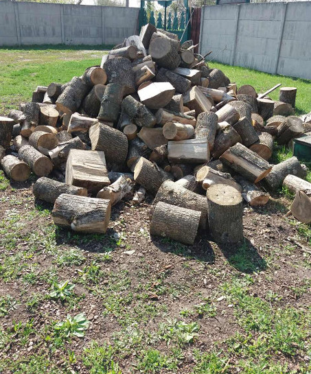Шість стовбурів дерев породи ясен, розпиляні на частини