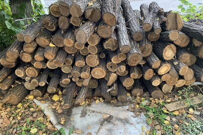 Відрізки колод деревини в загальній кількості 141 шт.