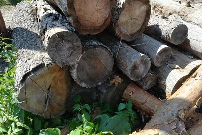 Колоди дерева дубу в кількості 20 штук (загальна кубатура складає 2928 м3)