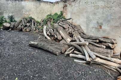 """Колоди пиляних дерев породи """"Акація біла"""" та """"Ясен"""" в кількості 4 кубічних метрів"""